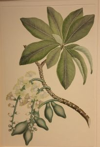 Florilegium a new exhibition of the Library's Rare Books and Special Collections